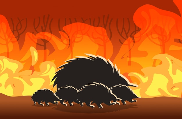 Echidna silhouettes running from forest fires in australia animals dying in wildfire bushfire burning trees natural disaster concept intense orange flames horizontal