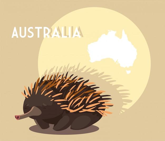 オーストラリアの地図とエキドナ