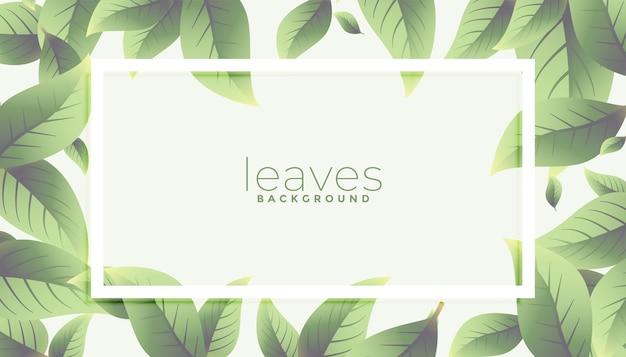 에코 그린 나뭇잎 프레임 배경 디자인