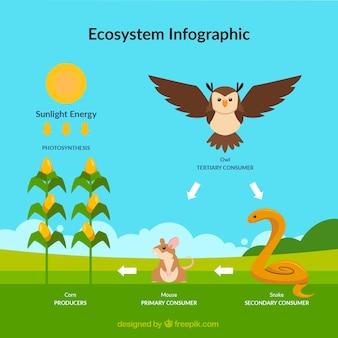 생태계 인포 그래픽
