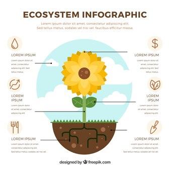 Экосистемная инфографика