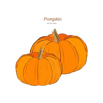 Ector hand drawn set illustration of pumpkin.