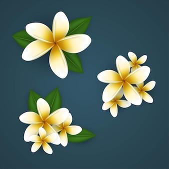 Ector tropical plant plumeria or frangipani flowers free vector