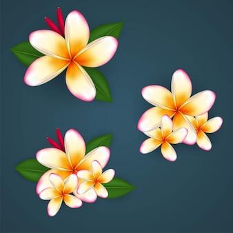 Эктор тропическое растение плюмерия или цветы франжипани бесплатные векторы