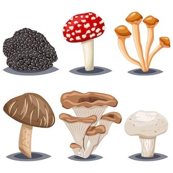 Съедобные и ядовитые грибы. шампиньоны, шиитаке, опята, устрицы, трюфели и мухомор мухомор. мультяшный набор на белом фоне.