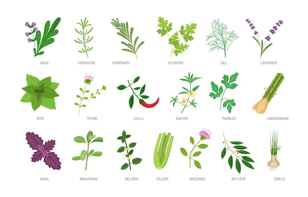 Edible herbs with names inscription set. healthy botanical food ingredients and spices