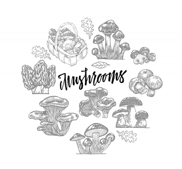 Edible mushroom icons round template