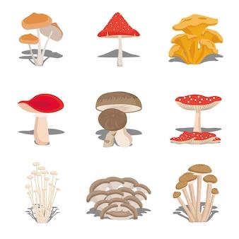 식용 버섯 세트 버섯의 종류, 식용 버섯의 다른 종류의 그림. 플랫 스타일.