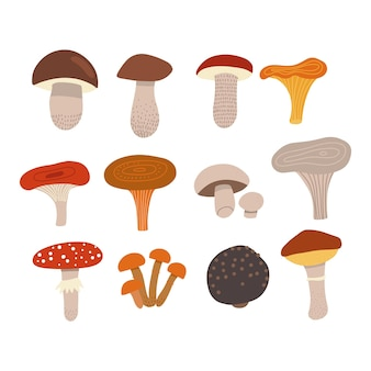 Edible mushrooms set with poisonous fly agaric different types of mushrooms such as champignons chan...