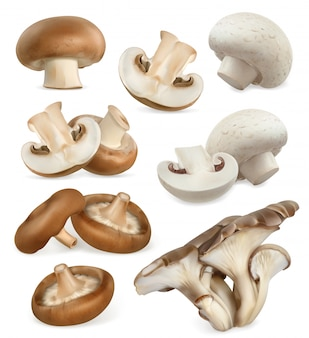 Edible mushrooms. shiitake, oyster, cremini, white button. 3d  icons set