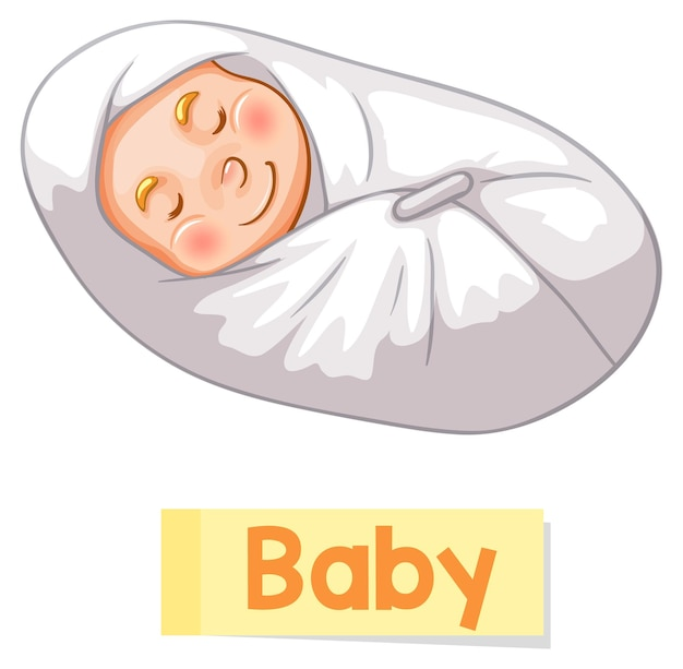 Educational english word card of baby