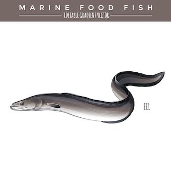 Eel. marine food fish