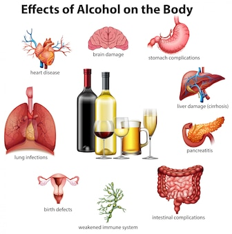 the effects of alcohol on the human body Here's how alcohol can affect your body: brain: alcohol interferes with the brain's communication pathways, and can affect the way the brain looks and works these disruptions can change mood and behavior, and make it harder to think clearly and move with coordination heart: drinking a lot over a.