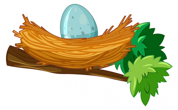 Egg in nest branch