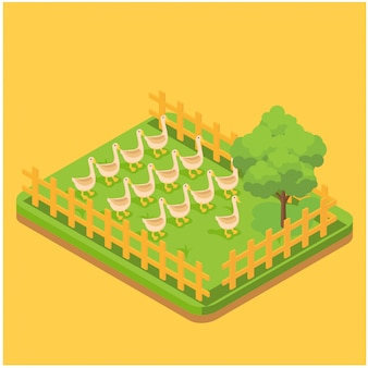 Egg production isometric composition with images of ducks feeding on grass in the farm page vector illustration