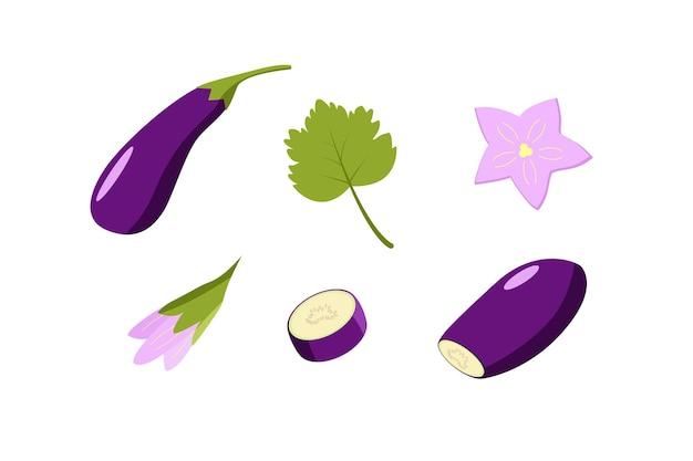Баклажаны целиком и нарезанные, цветы и листья баклажана. векторная иллюстрация овощей, набор урожая.