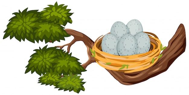 Яйца в птичьем гнезде на ветке дерева