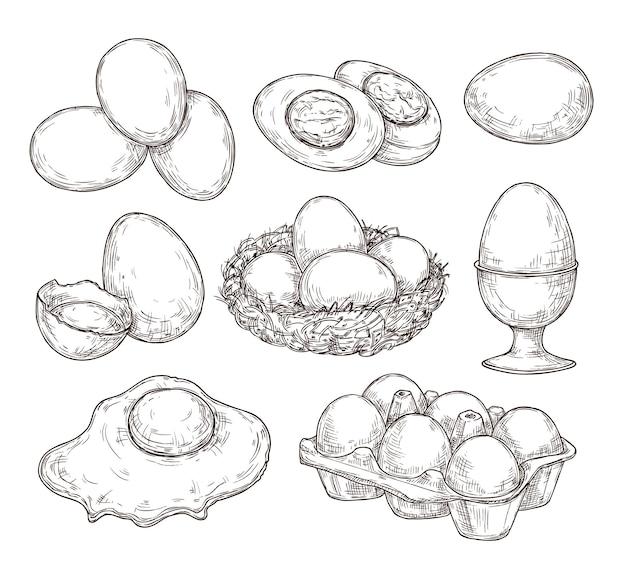 卵のスケッチ。ヴィンテージ天然卵、壊れた殻