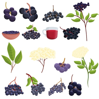 Elderberry icons set. cartoon set of elderberry  icons for web
