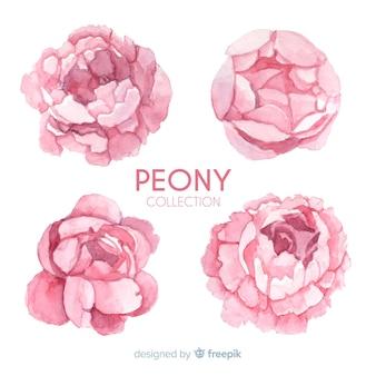Elegant collection of peony flowers