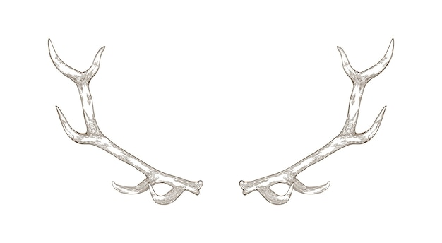 Elegant deer or reindeer antlers hand drawn with contour lines on white surface