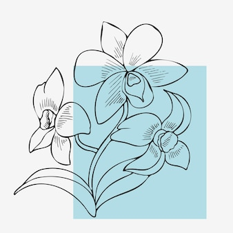 An elegant dendrobium flower in a linear style. clipart, an isolated drawing on a white background.