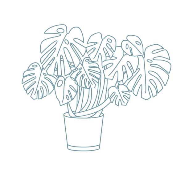 냄비에서 자라는 몬스테라의 우아한 그림. 화분에서 재배되는 큰 잎을 가진 이국적인 관엽 식물. 흰색 바탕에 등고선으로 그린 화분 손. 흑백 벡터 일러스트 레이 션.