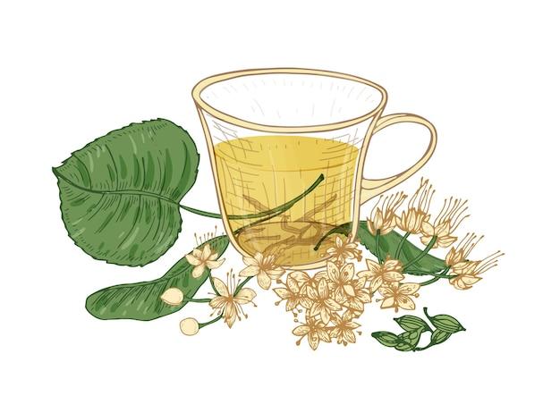 흰색 배경에 분리된 유리 컵, 린든 꽃, 꽃봉오리, 잎에 차를 우아하게 그린 것. 맛있는 천연 뜨거운 음료, 향기로운 음료. 복고 스타일의 다채로운 손으로 그린 벡터 일러스트 레이 션.