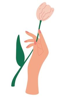 우아한 여성의 손에는 튤립이 있습니다. 장식용 꽃다발, 잎과 꽃이 만발한 구성. 어머니의 날 카드 개념입니다. 튤립과 우아한 꽃 포스터입니다. 벡터 일러스트 레이 션