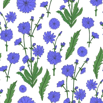 Elegant floral seamless pattern with detailed blooming purple chicory flowers hand drawn in retro style.