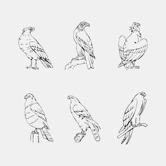 Elegante raccolta di uccelli disegnati a mano