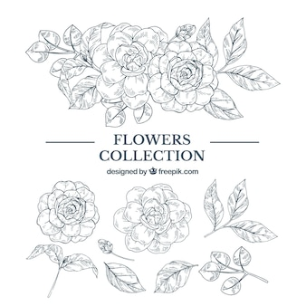 Elegant hand drawn floral element collection