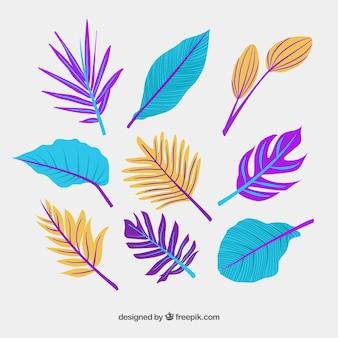 Elegant hand drawn tropical leaf collection
