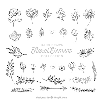 Elegant pack of hand drawn floral elements