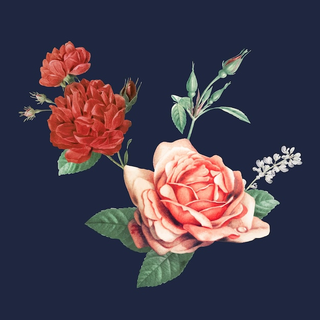Elegant red vector cabbage rose bouquet hand drawn illustration
