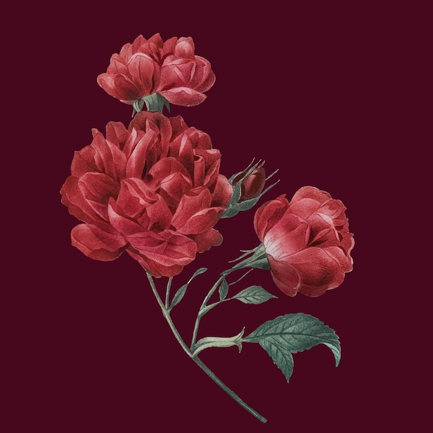 Elegant red vector french rose bouquet hand drawn illustration