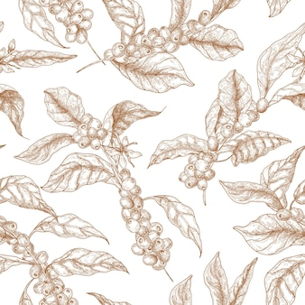 Elegant seamless pattern with coffea or coffee tree branches, flowers, leaves and fruits or berries drawn with contour lines