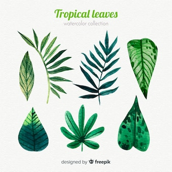 Elegant watercolor tropical leaf collection
