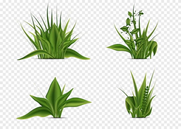 Elements of grass of different shapes set
