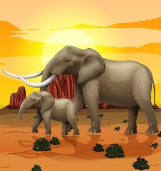 자연 속의 elepehant