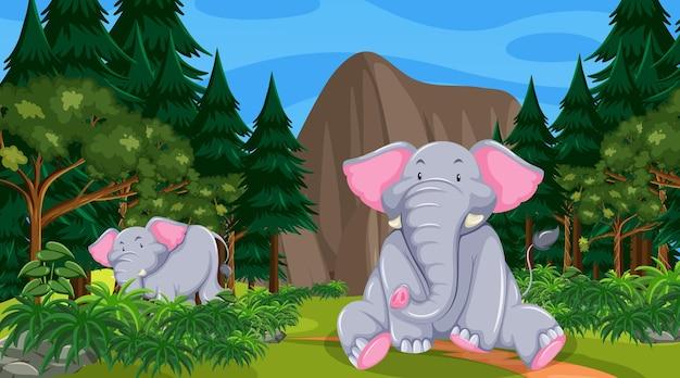 Elefante nella scena della foresta o della foresta pluviale con molti alberi
