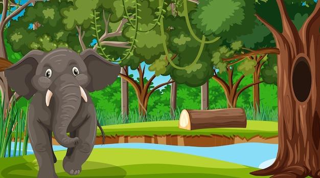 Un elefante nella scena della foresta con molti alberi