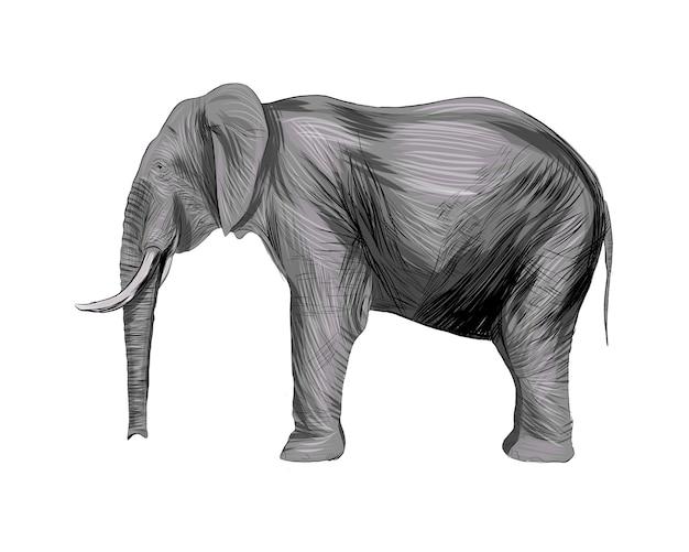 水彩、色付きの描画、リアルなスプラッシュから象。
