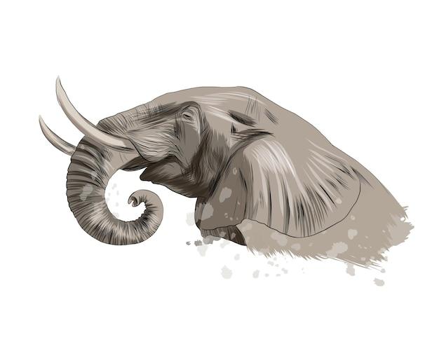 수채화, 컬러 드로잉, 현실의 스플래시에서 코끼리 머리 초상화.