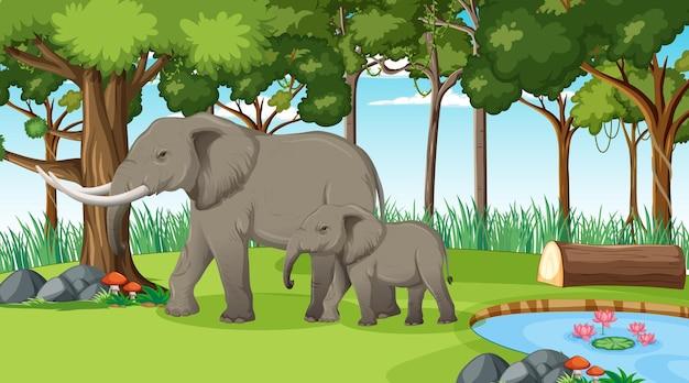 多くの木がある森や熱帯雨林のシーンで象
