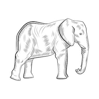 白い背景で隔離の象。グラフィックの大きな動物のサバンナを彫刻スタイルでスケッチします。レトロな黒と白の図面をデザインします。ベクトルイラスト。