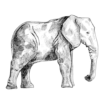 Elephant isolated on white background. sketch graphic big animal savanna in engraving style.