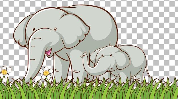 Слон на траве поля на прозрачном фоне
