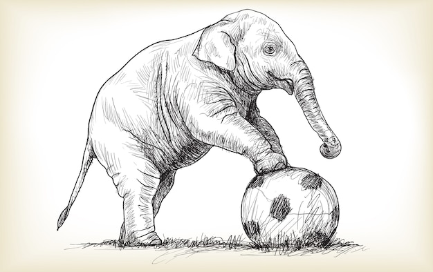 Elephant playing football illustration