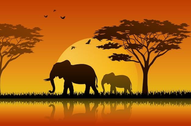Силуэт слона на закате